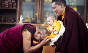 Is Karmapa Thaye Dorje's son the incarnation of Sharmapa Rinpoche?